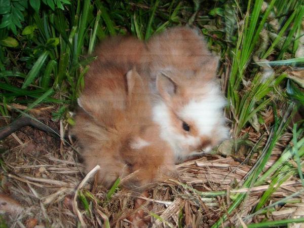 Bunny`s in » Kleintiere