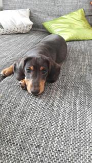 Der kleine Hugo