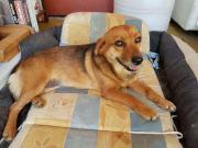 Familienhund Abby