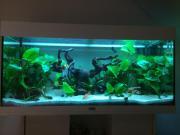 Fische abzugeben