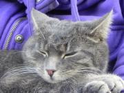 Gesunde Katzen durch