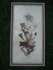 getrocknete Blumen im Bilderrahmen Bild