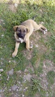Ginger, 7 Monate