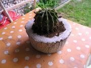 Gr0ßer Kaktus, Aloe