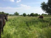 Grundstück, Acker, Wiese