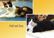 Hedi + Joey suchen