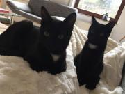 junge Katzen abzugeben