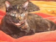 Katze Arielle sucht
