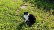 Katze Kater entlaufen