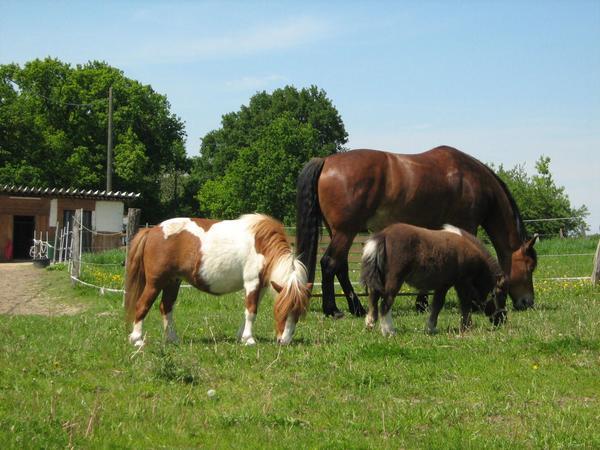 boxen offenstall weidepl tze pferde in herzogenrath bei deinetierwelt. Black Bedroom Furniture Sets. Home Design Ideas