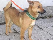Pascale - NOTFALL - Hundefräulein