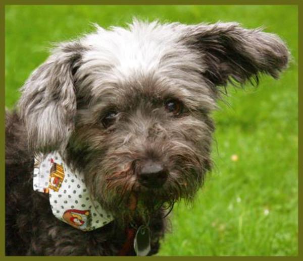 Patenhund: Nicola, 14 » Hunde