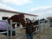 Pferd zur Verfügung /