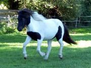 Pferdebegeisterte Reitermädels gesucht ;-)