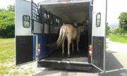 Pferdetransporte bis zu