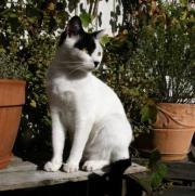 Piluca - zauberhaftes Katzenmädchen