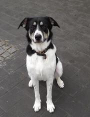 Schmusehund Sally sucht