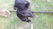 Stallhasin schwarz weiblich