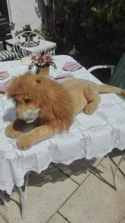 Steiff Tier Löwe Molly Leo