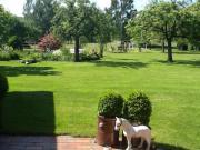 Suche 2 Ponystuten -