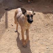 SUVA (9 Monate),