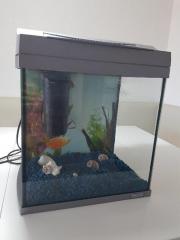 Tetra Aquarium 30Liter