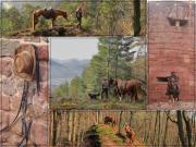Wanderreiten + Fotografieren im