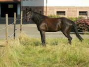 Wiese/Pferdekoppel