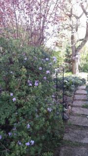 Wochenendgrundstück, Garten im