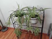 Zimmerpflanzen Pflanzen